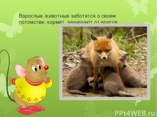 Взрослые животные заботятся о своем потомстве: кормят, защищают от врагов.