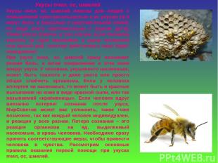 Укусы пчел, ос, шмелей Укусы пчел, ос, шмелей опасны для людей с повышенной чувс
