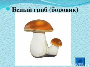 Белый гриб (боровик) *