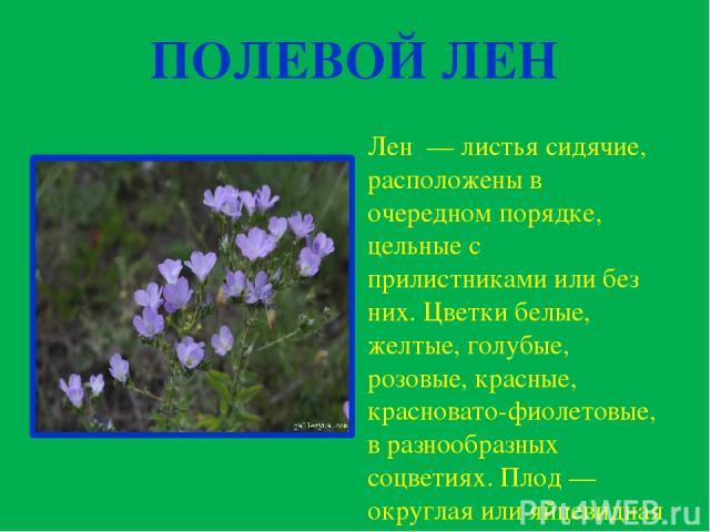 ПОЛЕВОЙ ЛЕН Лен —листья сидячие, расположены в очередном порядке, цельные с прилистниками или без них. Цветки белые, желтые, голубые, розовые, красные, красновато-фиолетовые, в разнообразных соцветиях. Плод — округлая или яйцевидная коробочка с пл…