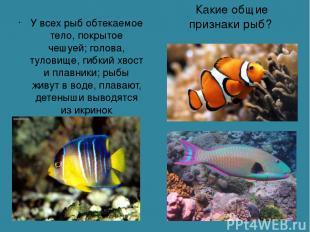 Какие общие признаки рыб? У всех рыб обтекаемое тело, покрытое чешуей; голова, т