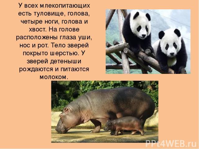 У всех млекопитающих есть туловище, голова, четыре ноги, голова и хвост. На голове расположены глаза уши, нос и рот. Тело зверей покрыто шерстью. У зверей детеныши рождаются и питаются молоком.