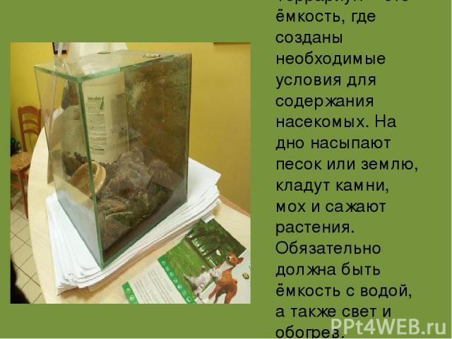 Террариум – это ёмкость, где созданы необходимые условия для содержания насекомых. На дно насыпают песок или землю, кладут камни, мох и сажают растения. Обязательно должна быть ёмкость с водой, а также свет и обогрев.