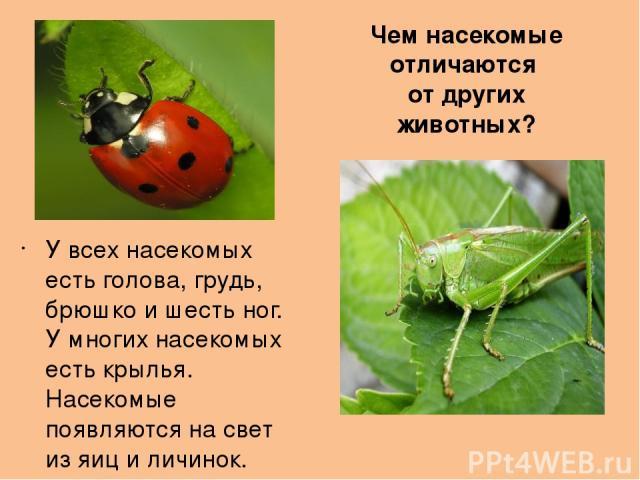 Чем насекомые отличаются от других животных? У всех насекомых есть голова, грудь, брюшко и шесть ног. У многих насекомых есть крылья. Насекомые появляются на свет из яиц и личинок.