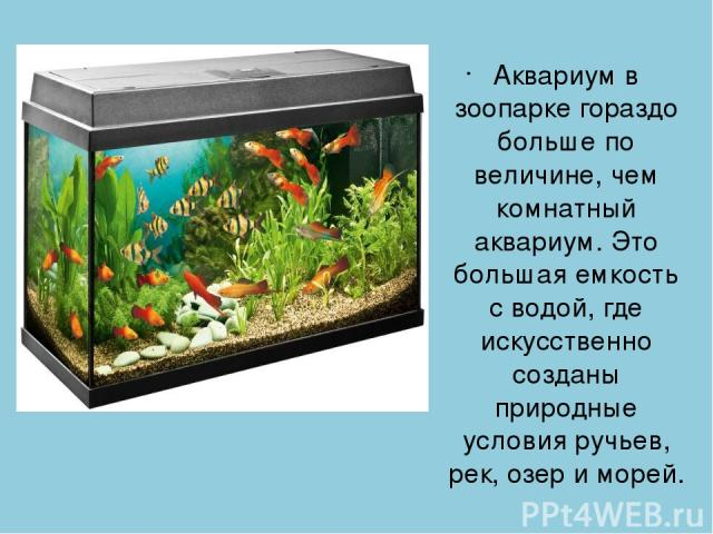 Аквариум в зоопарке гораздо больше по величине, чем комнатный аквариум. Это большая емкость с водой, где искусственно созданы природные условия ручьев, рек, озер и морей.