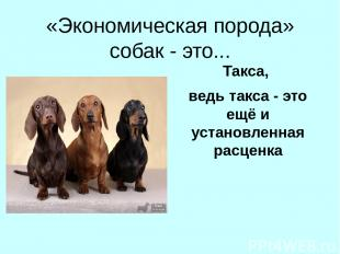 «Экономическая порода» собак - это... Такса, ведь такса - это ещё и установленна