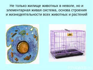 Не только жилище животных в неволе, но и элементарная живая система, основа стро