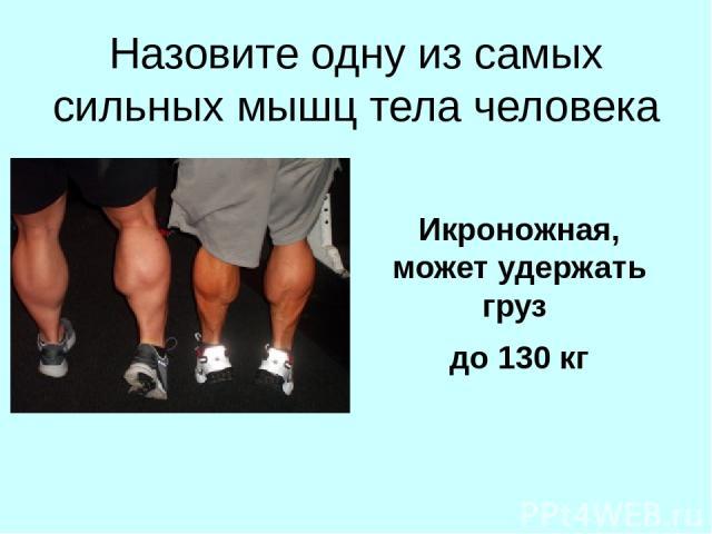 Назовите одну из самых сильных мышц тела человека Икроножная, может удержать груз до 130 кг