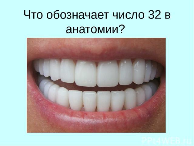 Что обозначает число 32 в анатомии?