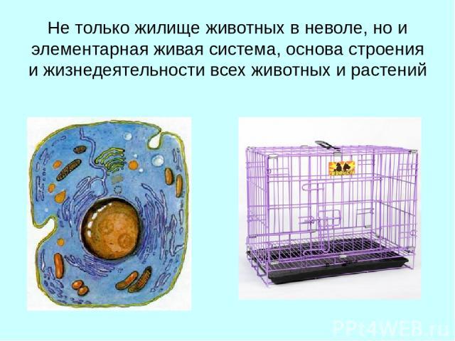 Не только жилище животных в неволе, но и элементарная живая система, основа строения и жизнедеятельности всех животных и растений