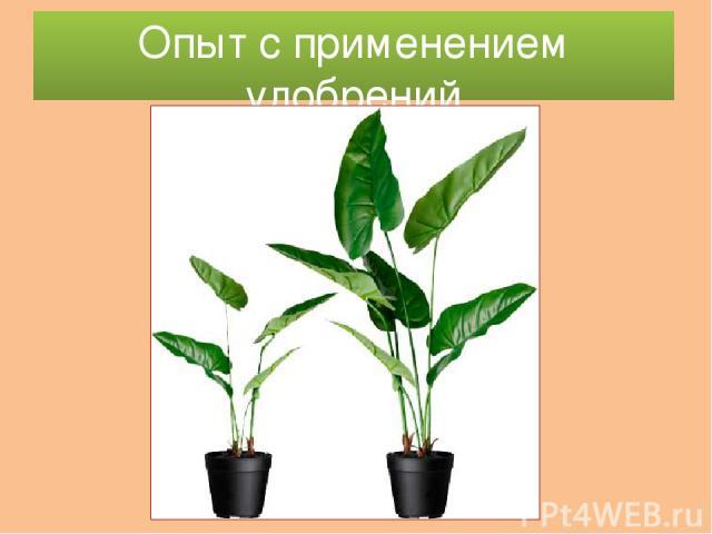 Опыт с применением удобрений