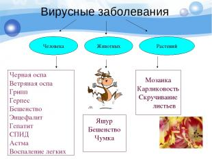 Вирусные заболевания Человека Животных Растений Черная оспа Ветряная оспа Грипп