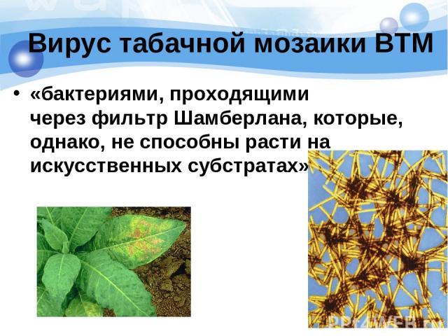 Вирус табачной мозаики ВТМ «бактериями, проходящими черезфильтр Шамберлана, которые, однако, не способны расти на искусственных субстратах»