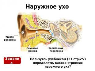 Наружное ухо Пользуясь учебником §51 стр.253 определите, каково строение наружно
