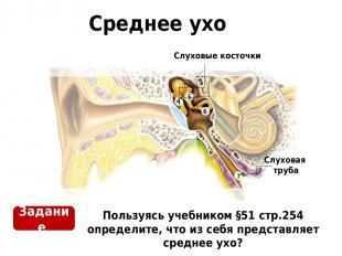 Среднее ухо Пользуясь учебником §51 стр.254 определите, что из себя представляет