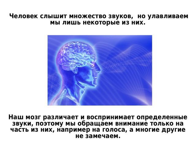Человек слышит множество звуков, но улавливаем мы лишь некоторые из них. Наш мозг различает и воспринимает определенные звуки, поэтому мы обращаем внимание только на часть из них, например на голоса, а многие другие не замечаем.