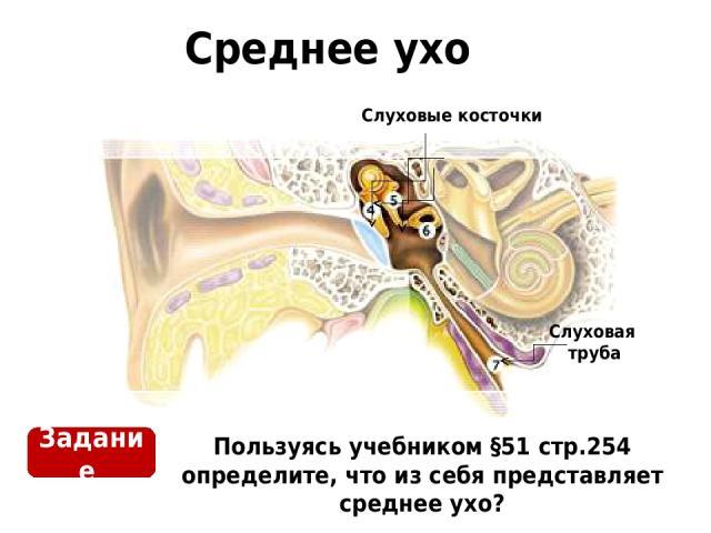 Среднее ухо Пользуясь учебником §51 стр.254 определите, что из себя представляет среднее ухо? Задание Слуховые косточки Слуховая труба