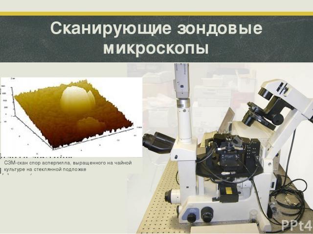 Сканирующие зондовые микроскопы Создают трехмерное изображение изучаемого объекта. Они способны различать частицы порядка 0,1 нм. СЗМ-скан спор аспергилла, выращенного на чайной культуре на стеклянной подложке