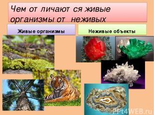 Чем отличаются живые организмы от неживых объектов? Живые организмы Неживые объе