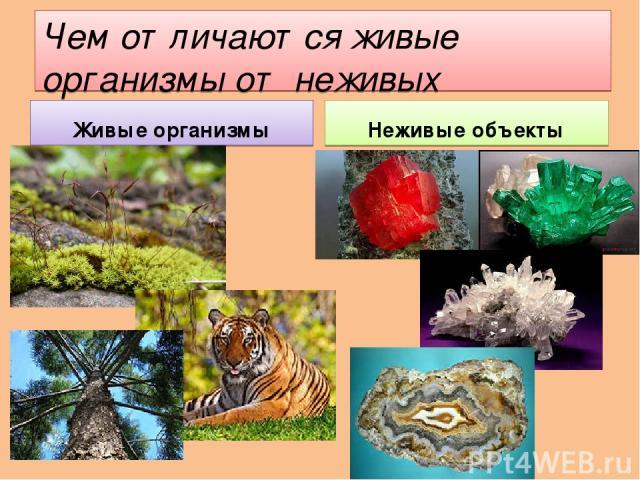 Чем отличаются живые организмы от неживых объектов? Живые организмы Неживые объекты