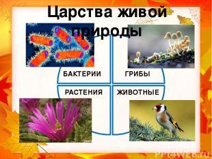 мухомор Распределите живые организмы по царствам, записывая их названия. дрозд х