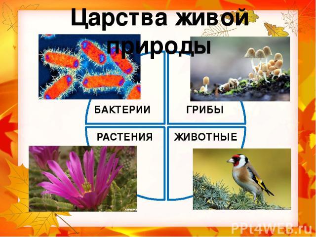 мухомор Распределите живые организмы по царствам, записывая их названия. дрозд холерный вибрион бабочка дуб ламинария трутовик стрептококк кит лотос
