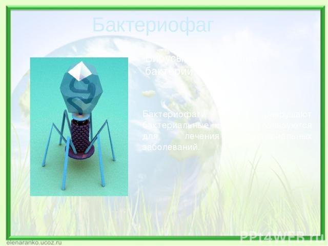 Вирусы, поражающие бактерии. Бактериофаги разрушают бактериальные клетки, используются для лечения бактериальных заболеваний. Бактериофаг