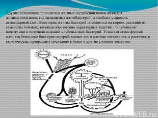 Другим источником пополнения азотных соединений почвы является жизнедеятельность