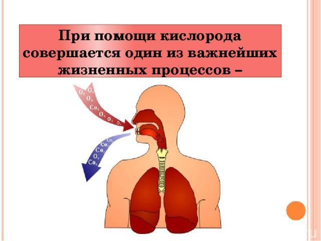 При помощи кислорода совершается один из важнейших жизненных процессов – дыхание.