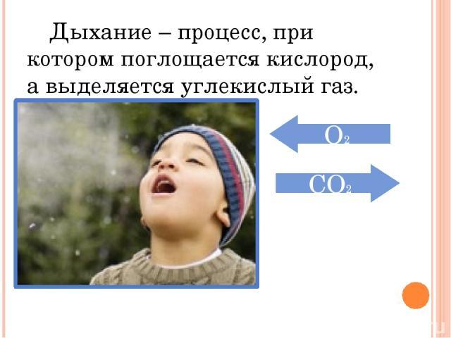 Дыхание – процесс, при котором поглощается кислород, а выделяется углекислый газ. О2 CО2