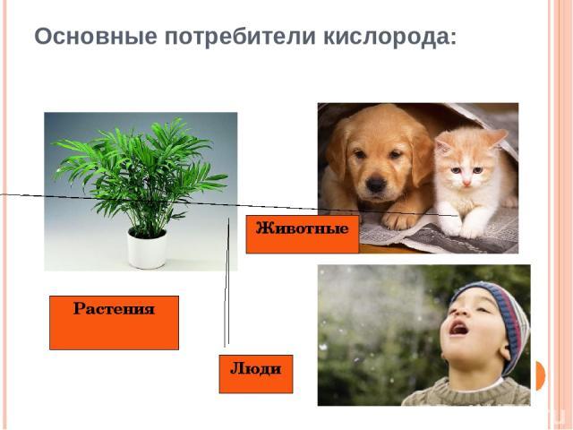 Основные потребители кислорода: Животные Люди Растения