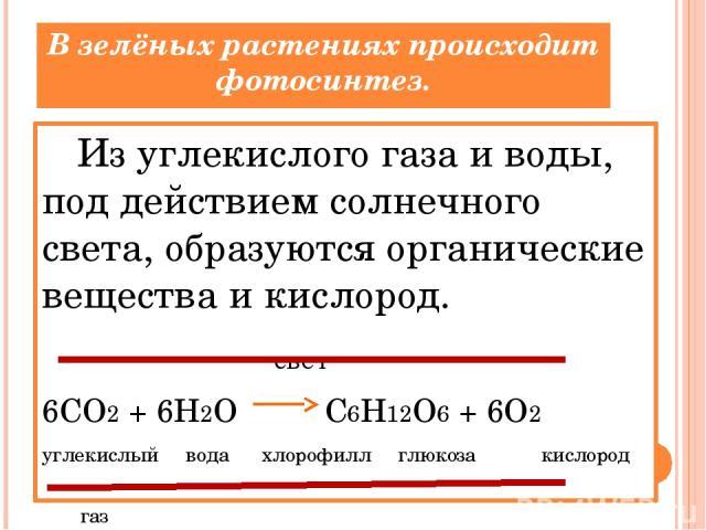 В зелёных растениях происходит фотосинтез. Из углекислого газа и воды, под действием солнечного света, образуются органические вещества и кислород. свет 6CO2 + 6H2O C6H12O6 + 6O2 углекислый вода хлорофилл глюкоза кислород газ
