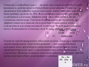 Гетерозис(«гибридная сила») — явление, при котором гибриды по ряду признаков и