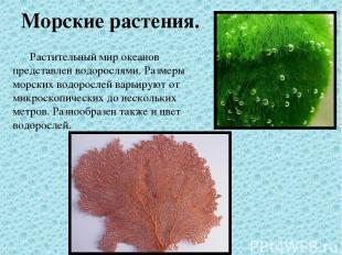 Морские растения. Растительный мир океанов представлен водорослями. Размеры морс