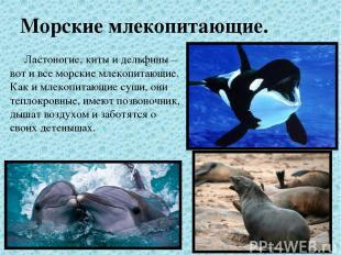 Морские млекопитающие. Ластоногие, киты и дельфины – вот и все морские млекопита