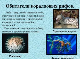 Обитатели коралловых рифов. Рыба – шар, чтобы защитить себя, раздувается как шар