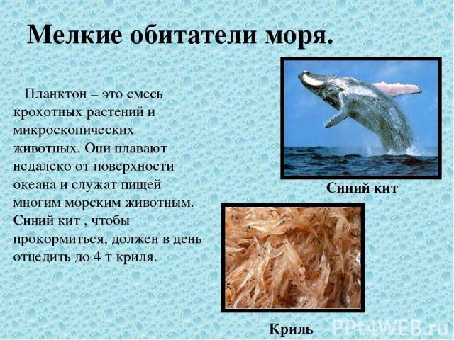 Мелкие обитатели моря. Планктон – это смесь крохотных растений и микроскопических животных. Они плавают недалеко от поверхности океана и служат пищей многим морским животным. Синий кит , чтобы прокормиться, должен в день отцедить до 4 т криля. Криль…