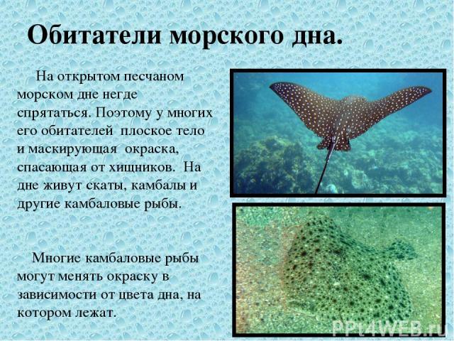 Обитатели морского дна. На открытом песчаном морском дне негде спрятаться. Поэтому у многих его обитателей плоское тело и маскирующая окраска, спасающая от хищников. На дне живут скаты, камбалы и другие камбаловые рыбы. Многие камбаловые рыбы могут …