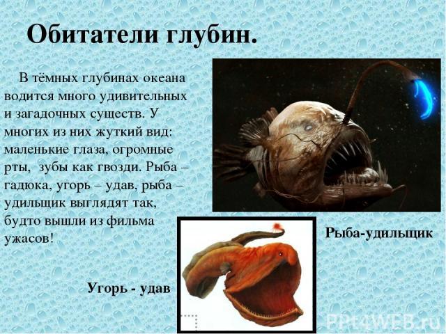 Обитатели глубин. В тёмных глубинах океана водится много удивительных и загадочных существ. У многих из них жуткий вид: маленькие глаза, огромные рты, зубы как гвозди. Рыба – гадюка, угорь – удав, рыба – удильщик выглядят так, будто вышли из фильма …