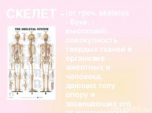 СКЕЛЕТ - (от греч. skeletos - букв. - высохший), совокупность твердых тканей в о