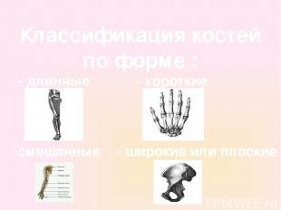 Классификация костей по форме : - длинные - короткие - широкие или плоские - сме