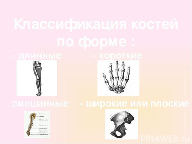 Классификация костей по форме : - длинные - короткие - широкие или плоские - смешанные