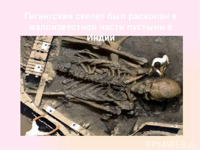 Гигантский скелет был раскопан в малоизвестной части пустыни в Индии