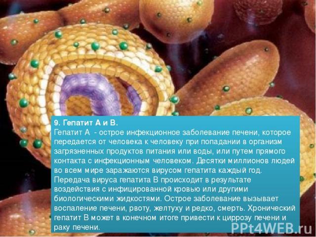 9. Гепатит А и В. Гепатит А - острое инфекционное заболевание печени, которое передается от человека к человеку при попадании в организм загрязненных продуктов питания или воды, или путем прямого контакта с инфекционным человеком. Десятки миллионов …