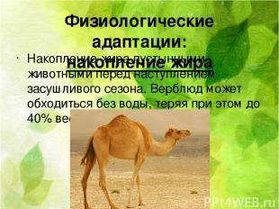 Физиологические адаптации: накопление жира Накопление жира пустынными животными
