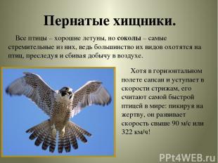 Пернатые хищники. Все птицы – хорошие летуны, но соколы – самые стремительные из