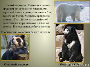 Белый медведь. Считается самым крупным четвероногим хищником: взрослый самец в д