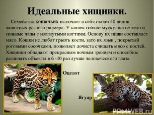 Идеальные хищники. Семейство кошачьих включает в себя около 40 видов животных ра