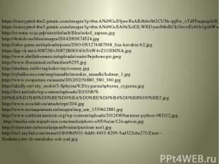 https://encrypted-tbn2.gstatic.com/images?q=tbn:ANd9GcS9jnwRsARi8dwlbGCU3h-ipjSw