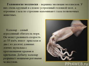 Головоногие моллюски – вершина эволюции моллюсков. У них очень крупный и сложно